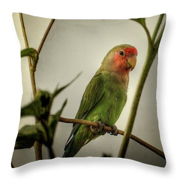 The Lovebird  Throw Pillow