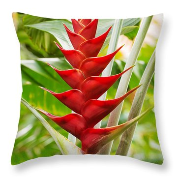 The Macaw Flower  Throw Pillow by MaryJane Armstrong