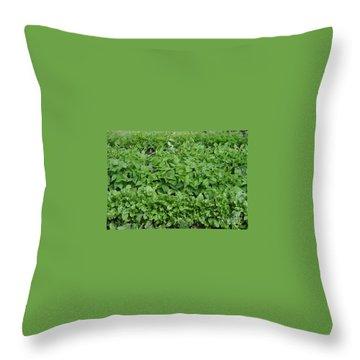The Market Garden Landscape Throw Pillow