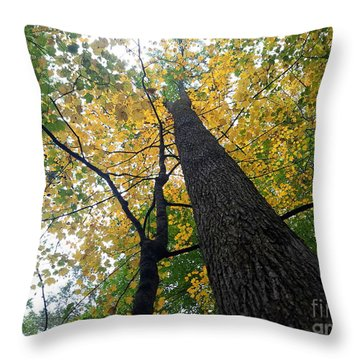 The Mighty Tulip Popular State Tree Of Indiana Throw Pillow