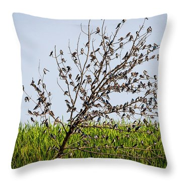 Throw Pillow featuring the photograph The More The Merrier- Tree Swallows  by Ricky L Jones