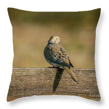 The Morning Dove Throw Pillow