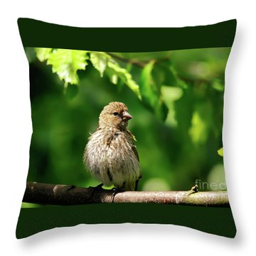 The Musician Takes A Break Throw Pillow by Lois Bryan