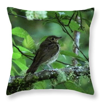 ..the Mysterious Thrush.. Throw Pillow by I'ina Van Lawick
