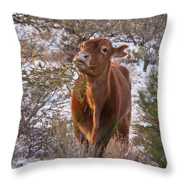 The New Years Cow Throw Pillow by Donna Greene