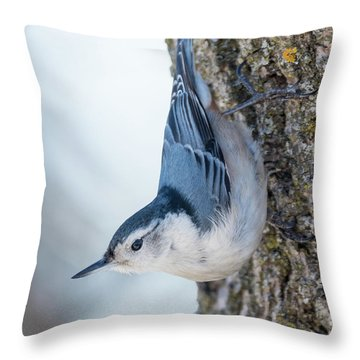 The Nut Collector... Throw Pillow