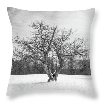 Throw Pillow featuring the photograph The Old Apple Tree Square by Edward Fielding