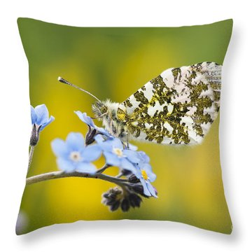 The Orange Tip Butterfly Throw Pillow