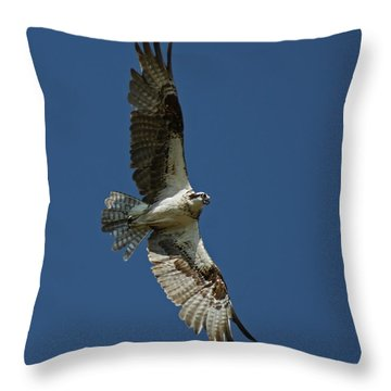 The Osprey Throw Pillow by Ernie Echols