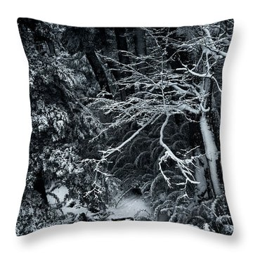 The Path To The Frozen Forest In The Argentine Patagonia Throw Pillow