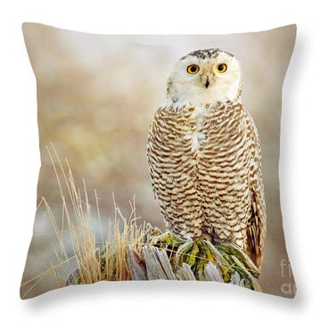 The Perch Throw Pillow