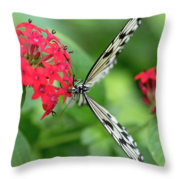 The Perfect Butterfly Land Throw Pillow