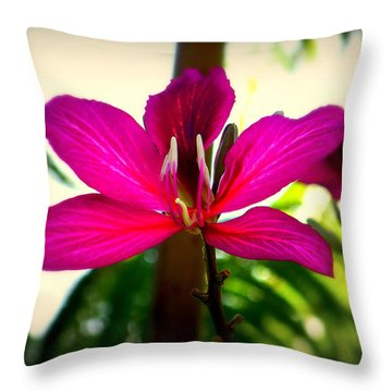 The Pink Lady Throw Pillow by Karen Wiles