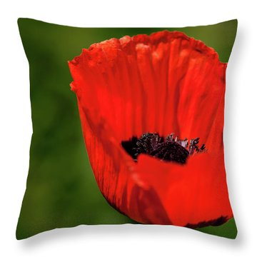 The Poppy Next Door Throw Pillow