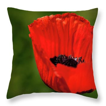 The Poppy Next Door Throw Pillow by Onyonet  Photo Studios