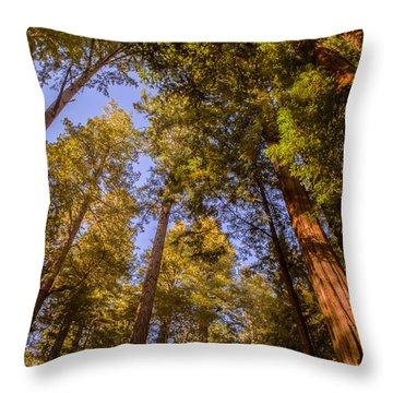 The Portola Redwood Forest Throw Pillow