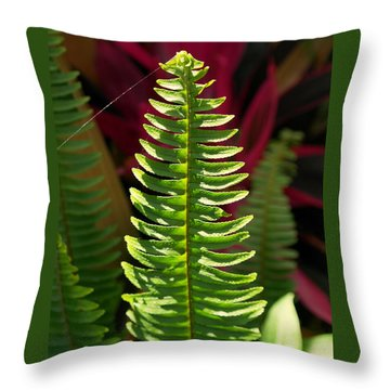 Throw Pillow featuring the photograph The Power Of One by Irma BACKELANT GALLERIES