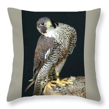 The Proud Falcon Throw Pillow