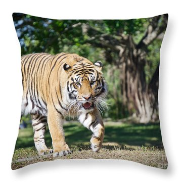 The Prowler Throw Pillow