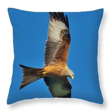 The Red Kite - Milvus Milvus Throw Pillow
