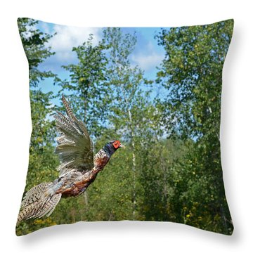 The Ring-necked Pheasant In Take-off Flight Throw Pillow