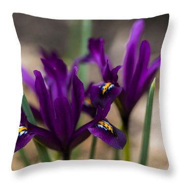 The Rise Of The Early Royal Dwarf Iris Throw Pillow