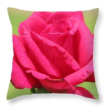 The Rose Throw Pillow by Amanda Barcon