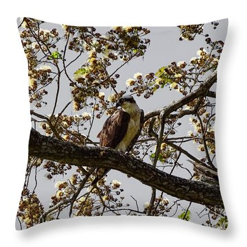 The Sea Eagle Throw Pillow