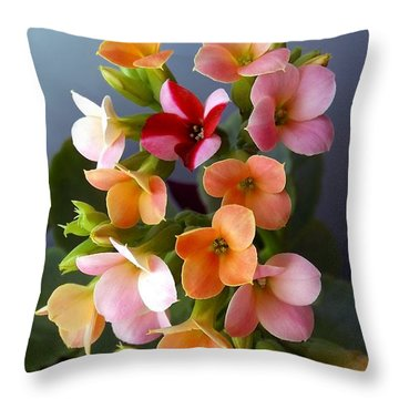 The Special One Throw Pillow by Danielle R T Haney