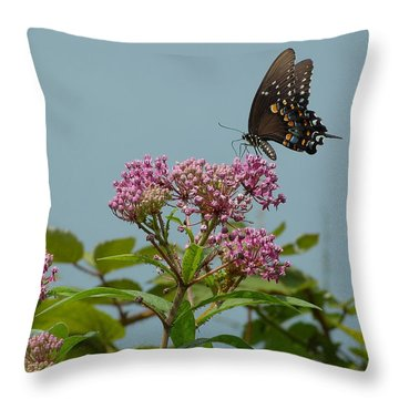 The Spicebush Swallowtail Of Prettyboy Reservoir Throw Pillow by Donald C Morgan