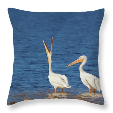 Throw Pillow featuring the photograph The Stretch by Kim Hojnacki