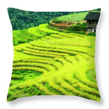 Throw Pillow featuring the photograph The Terraced Fields Scenery In Autumn by Carl Ning