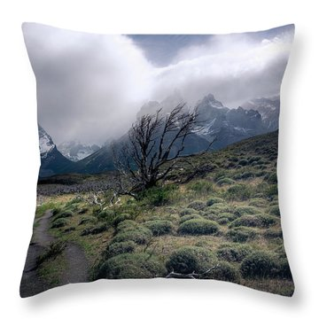 The Tree In The Wind Throw Pillow by Andrew Matwijec