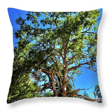 Throw Pillow featuring the photograph The Turtleback Tree by Lorraine Devon Wilke
