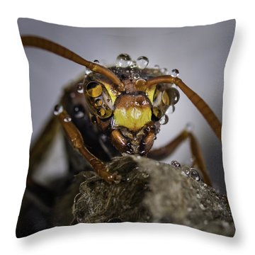 Throw Pillow featuring the photograph The Wasp by Chris Cousins