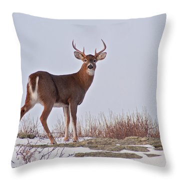 The Watchful Deer Throw Pillow