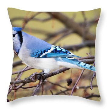 The Winter Blue Jay  Throw Pillow