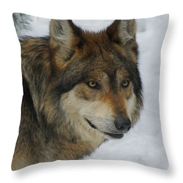 The Wolf 2 Throw Pillow by Ernie Echols