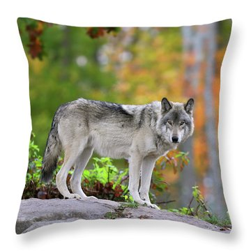 The Wolf. Throw Pillow