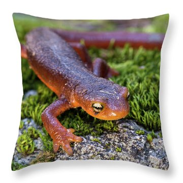 They Do Exist Throw Pillow by Scott Warner