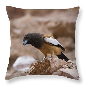 Thinking Treepie Throw Pillow