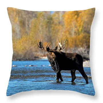 Thirst Quenching Throw Pillow