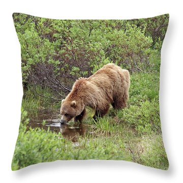 Thirsty Grizzly Throw Pillow