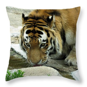 Thirsty Kitty Throw Pillow by George Jones