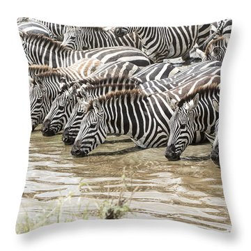 Thirsty Zebras Throw Pillow by Pravine Chester