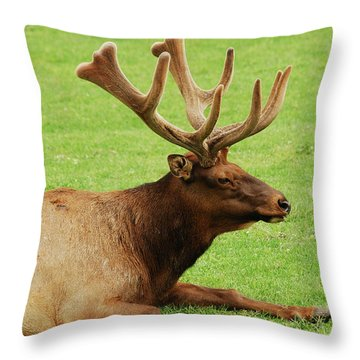 This Is The Life Throw Pillow by Michael Peychich