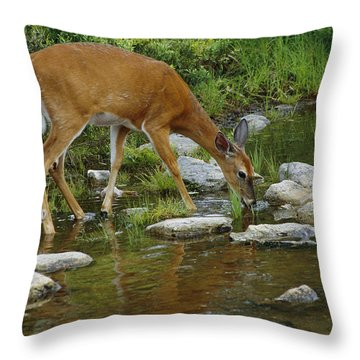 This Picture Has Already Been Indexed Throw Pillow