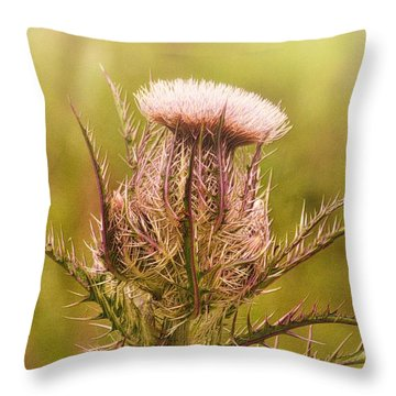 Thistle And Thorns Unfolding Throw Pillow