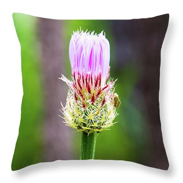 Thistle In The Canyon Throw Pillow