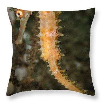Thorny Seahorse Throw Pillow
